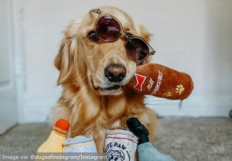 These Hip Dogs Are Living Their Lives to the Fullest and We Can Only Envy Them