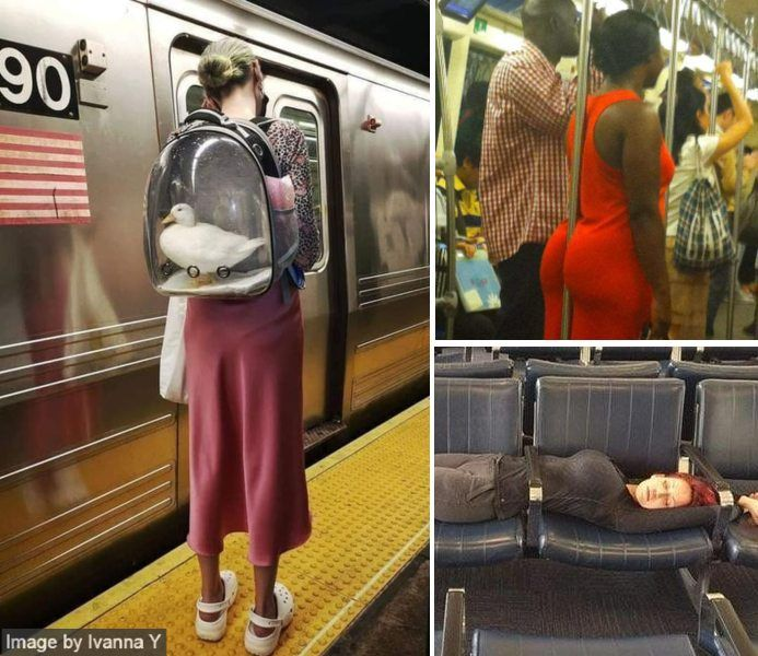 30 Times People Spotted Something Utterly Surreal on Public Transport and Couldn't Believe Their Eyes